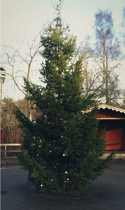 Årets julgran på Bollnästorget