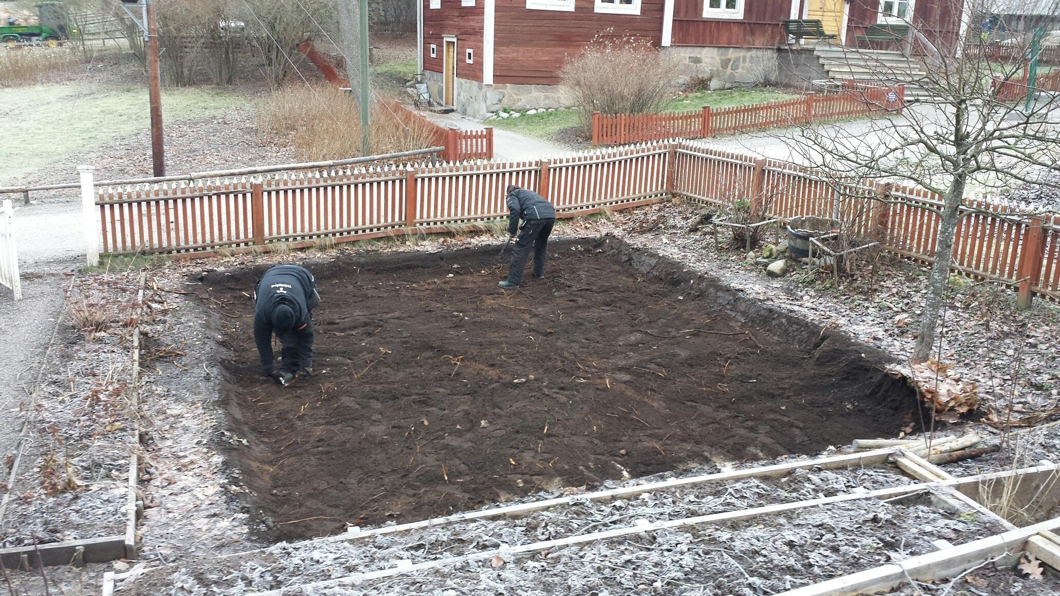 Kolonilottens odlingsyta har blivit utgrävd och rötter borttagna.