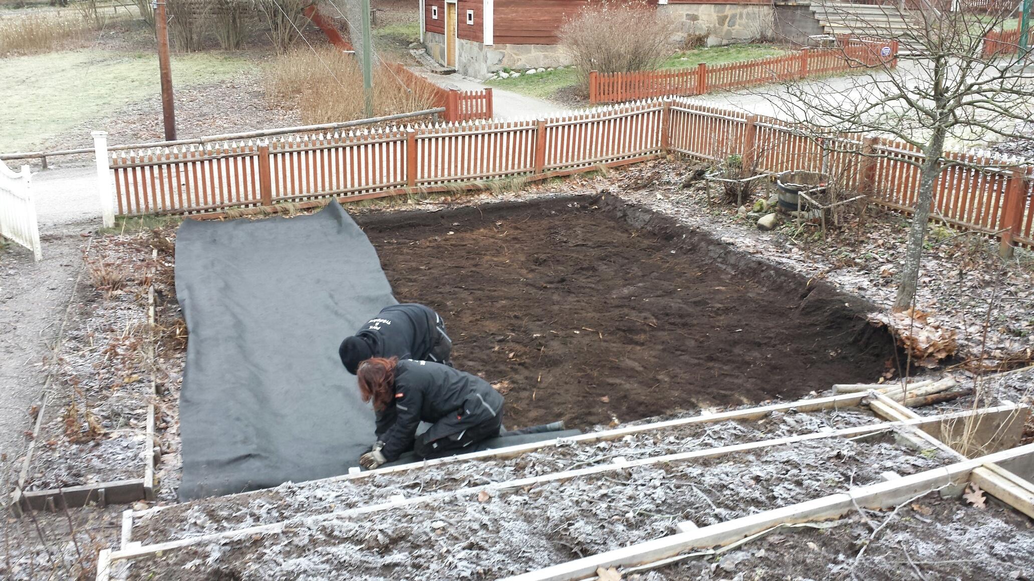 Markduken läggs på plats för att förhindra nya rötter att tränga fram i odlingarna.