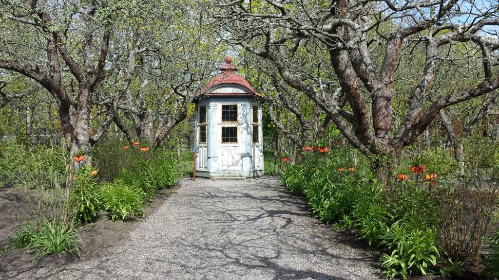 Kejsarkronorna blommar vackert i Skogaholms trädgård