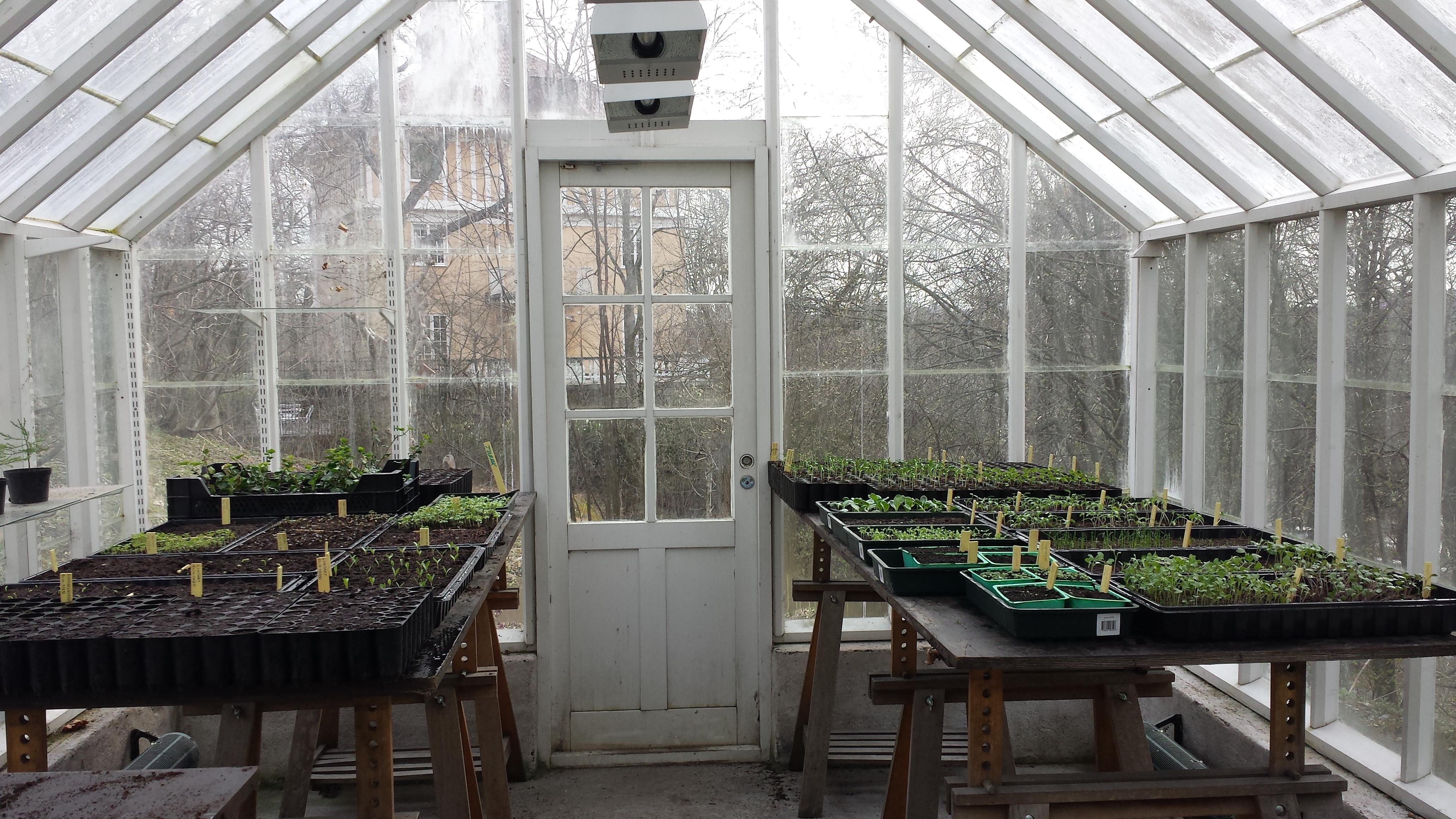 Sådd i växthuset